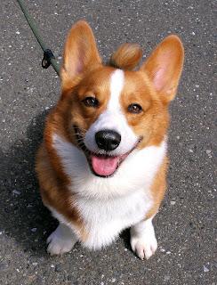 Treinar um cão