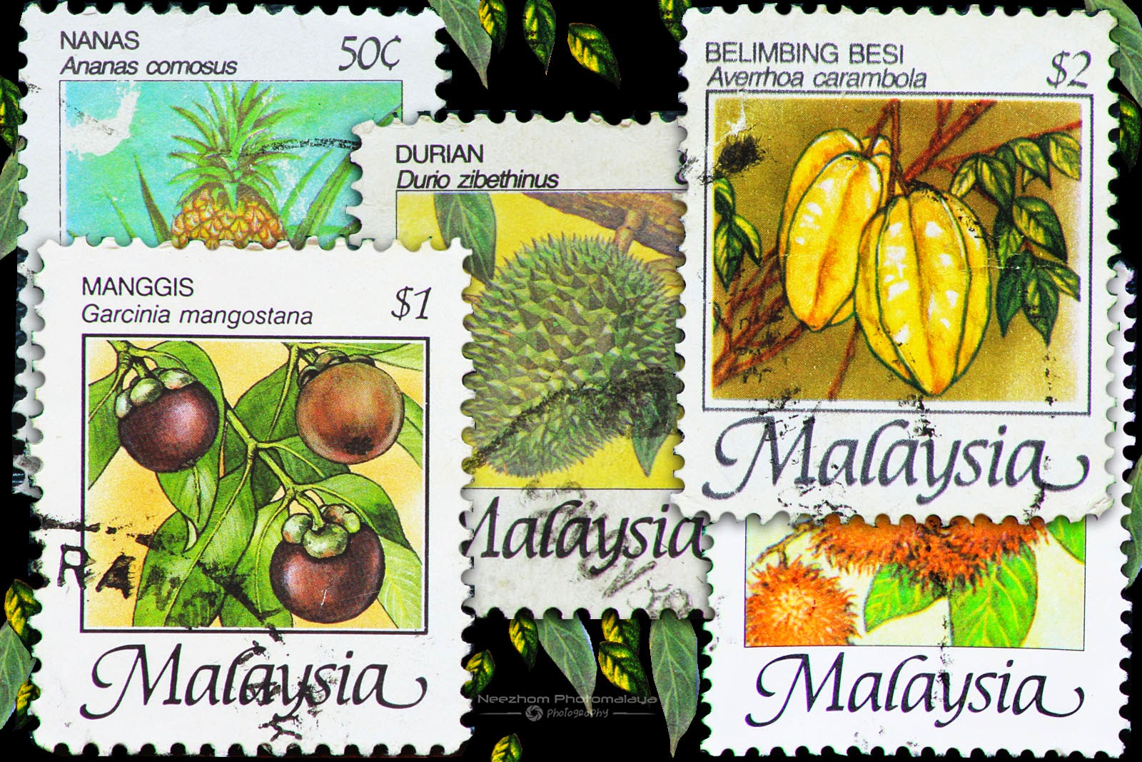 fruits of malaysia The current study was aimed to establish a research on p nigrum fruits that can  be used as a tool for quality control and standardisation of this plant in malaysia.
