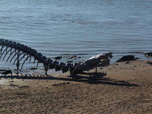 serpent d'océan