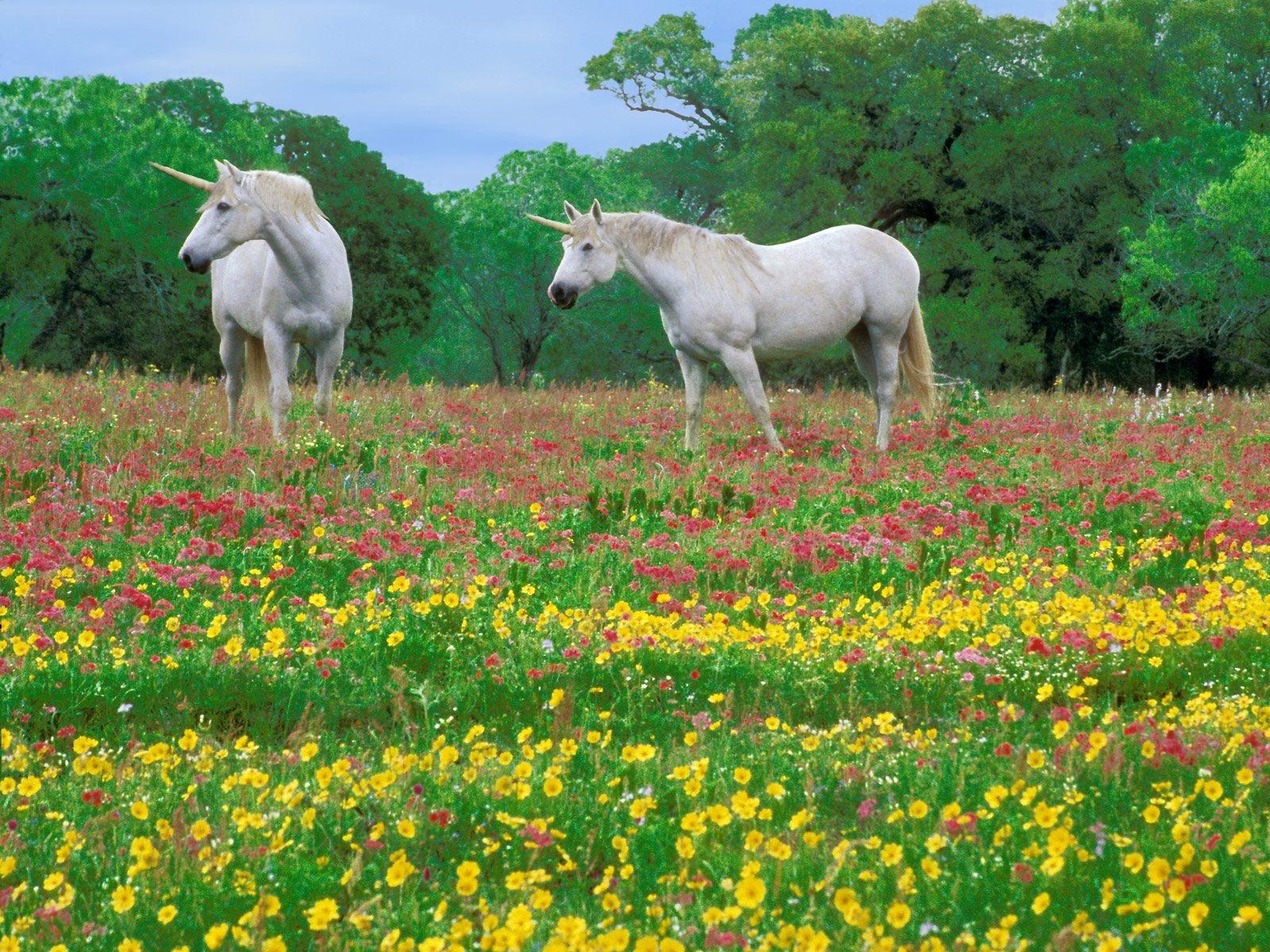 http://2.bp.blogspot.com/-7PBfLizhAA4/UW5RWMukUnI/AAAAAAAAfkM/8pKwIut3TDg/s1600/Caballos-Magicos-Wallpapers-HD.jpg