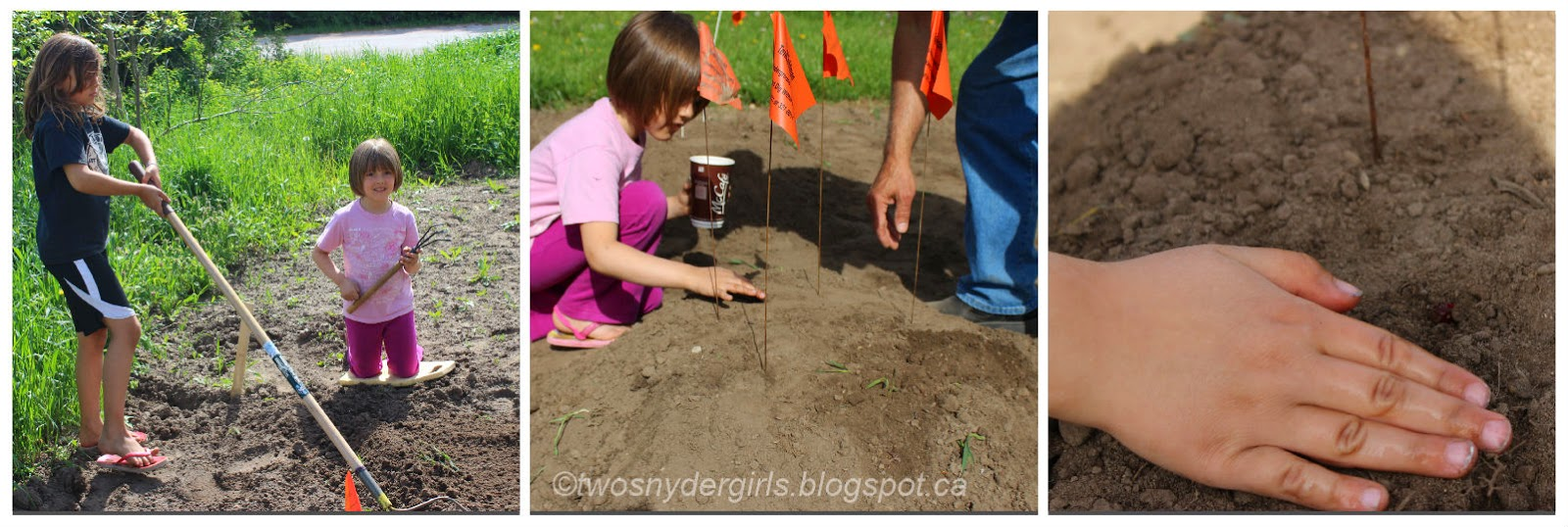 Planting corn seeds