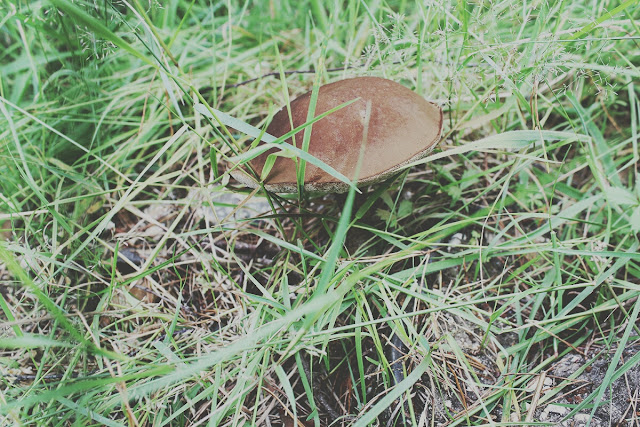 forest-mushrooms-ringwood-forest-summer-story-todaymyway