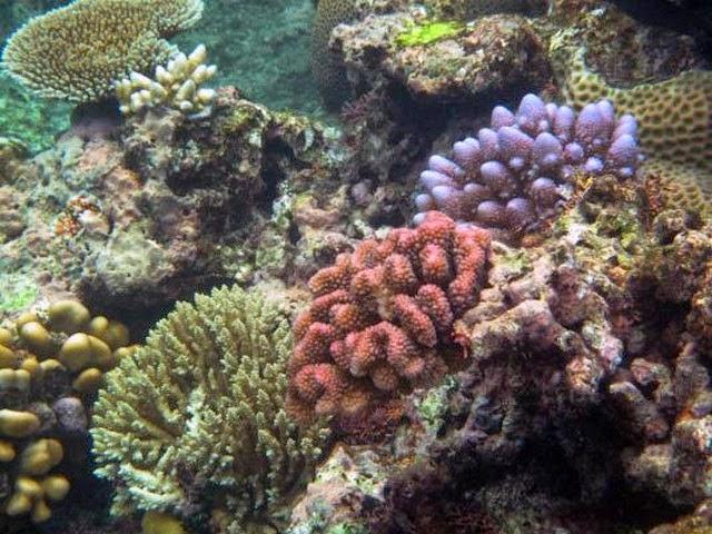 12. Great Barrier Reef (Cairns, Australia)