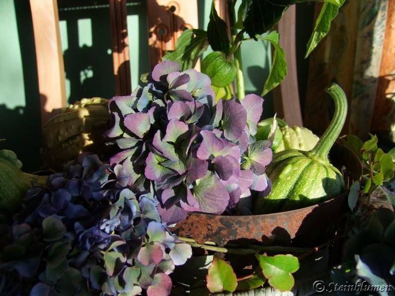 Hortensien und Kürbisse