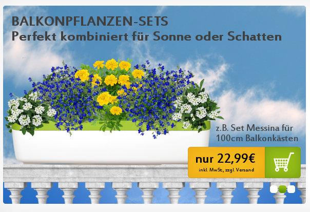bienesn testet balkonpflanzen bei meinem nicht vorhandenen gr nen daumen. Black Bedroom Furniture Sets. Home Design Ideas