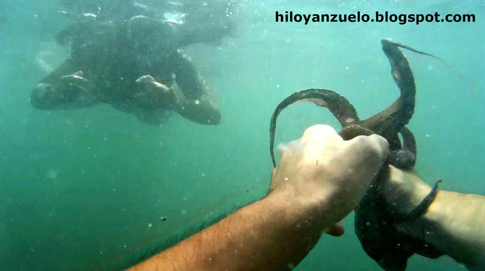 Hilo Y Anzuelo C Mo Capturar O Pescar Pulpos