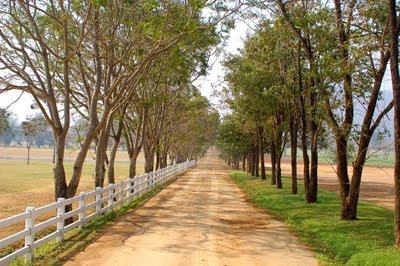 Camino rural en paisaje con grandes árboles y cercado de madera