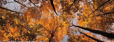 Jolie image de couverture facebook automne