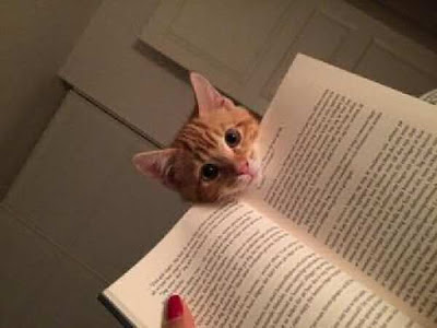 cat looks over edge of page book