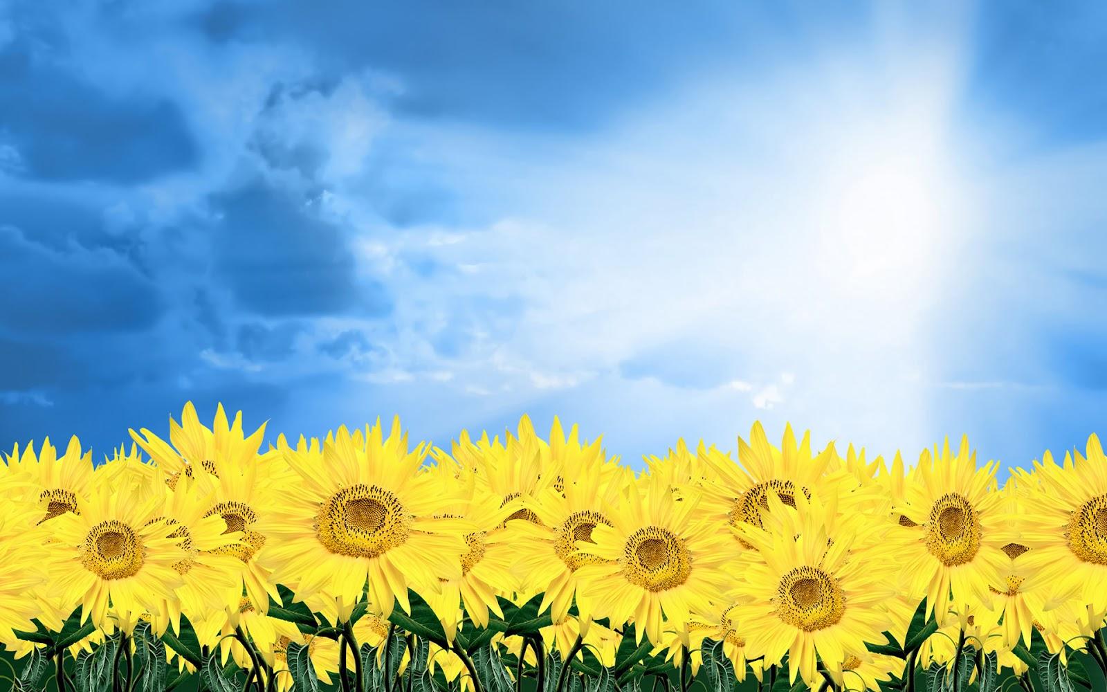 http://2.bp.blogspot.com/-7Qiy4oFl4Tk/T0E0k3wfIdI/AAAAAAAAJ0c/PdgipJqIcwg/s1600/HD+flowers+wallpapers.+(3).jpg