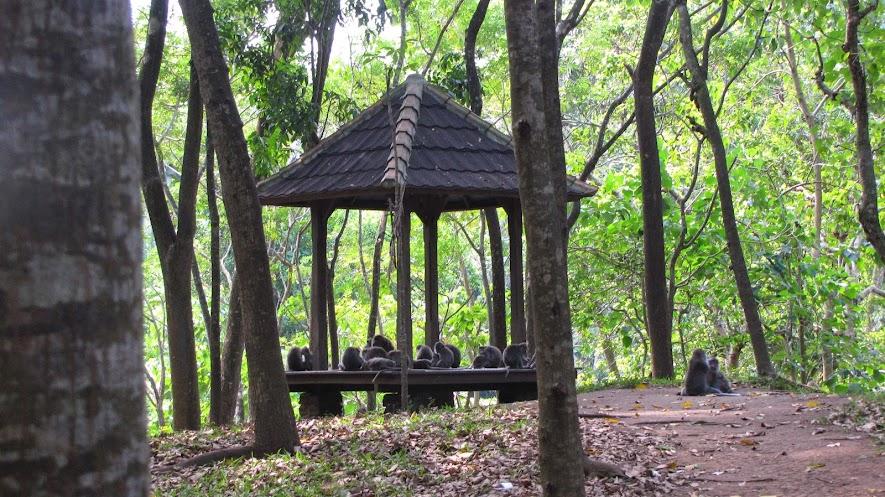 ubud bali indonesia workaway helpx