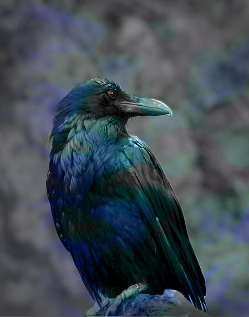 Saranas gift it changes everything symbolism raven symbolism raven buycottarizona Gallery