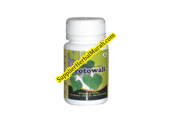 Brotowali kapsul herbal insani