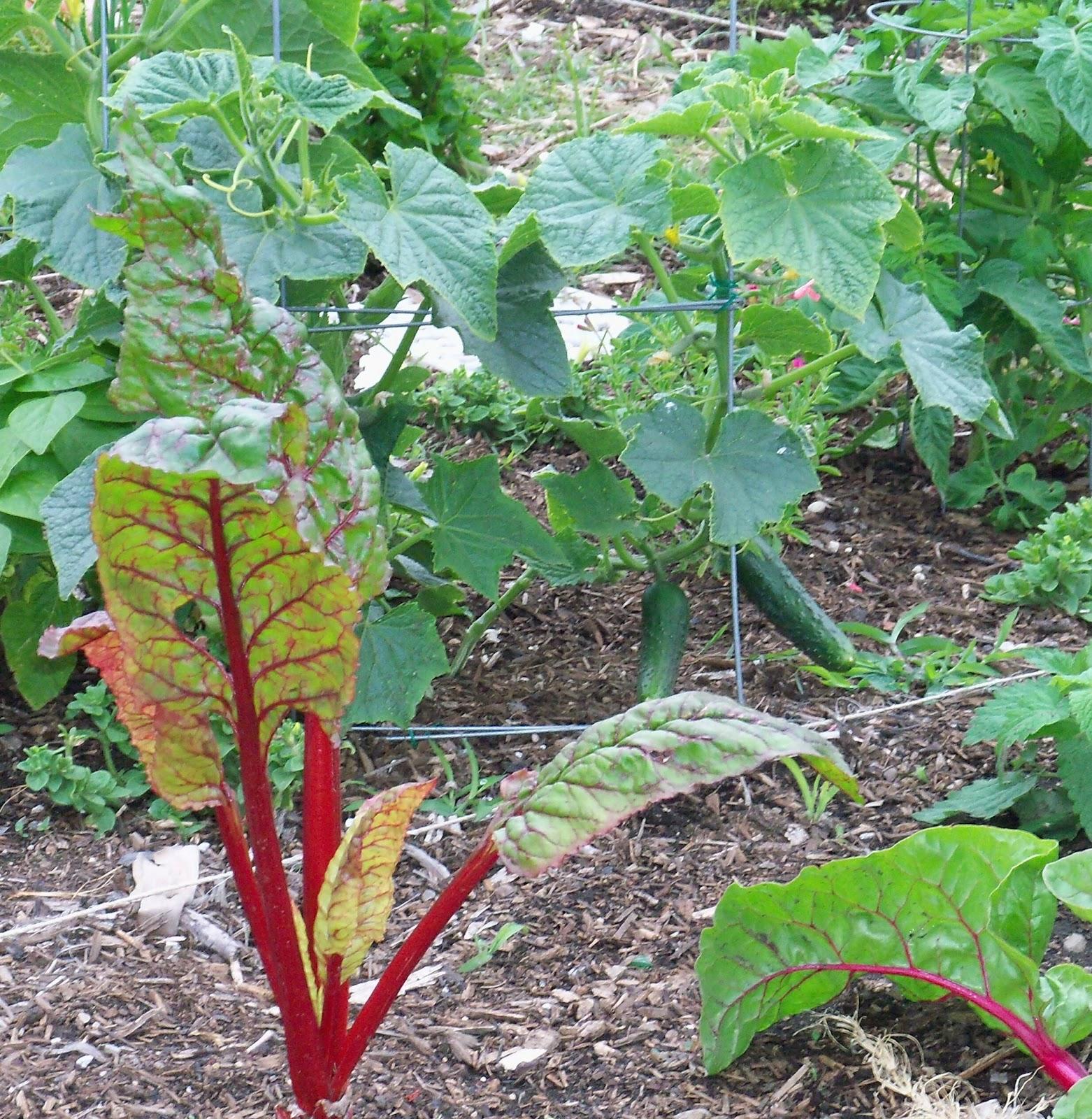 la garden blog may in our southern california gardens