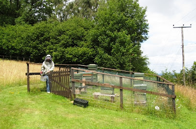 Hives in a fenced-off area of field