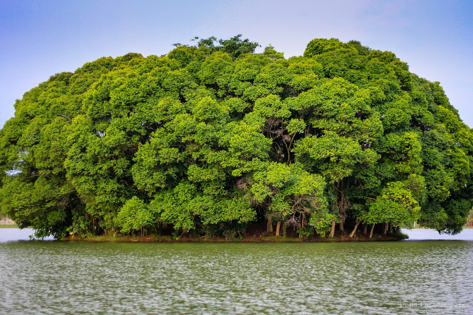 pulau Wetland Putrajaya