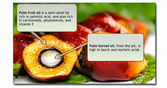 Palm-Fruit-Kernel
