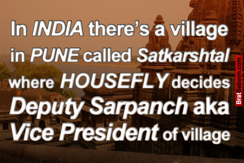 In india theres a village in pune called satkarshtal where housefly decides deputy sarpanch aka vice president of village