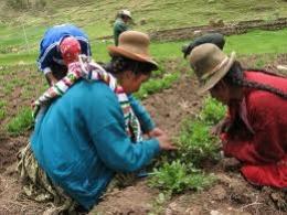 Mujeres campesinas trabajando
