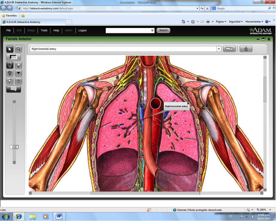 Enchanting Adam Interactive Anatomy Component - Anatomy And ...