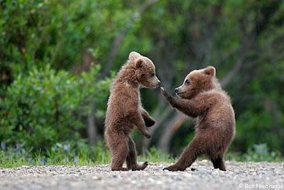 gambar kartun beruang - gambar beruang