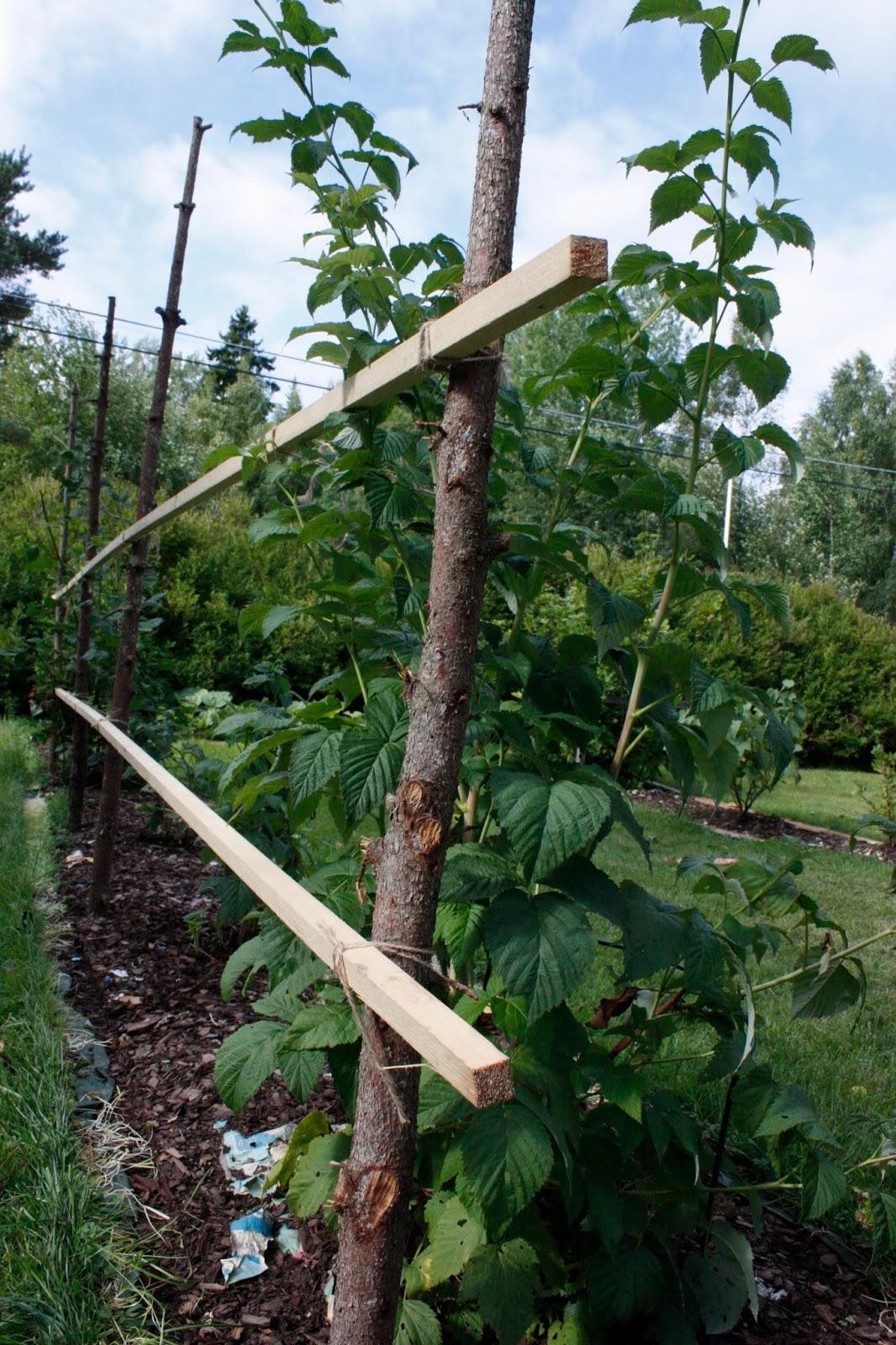 Josefins trädgård: trädgårdsrummen