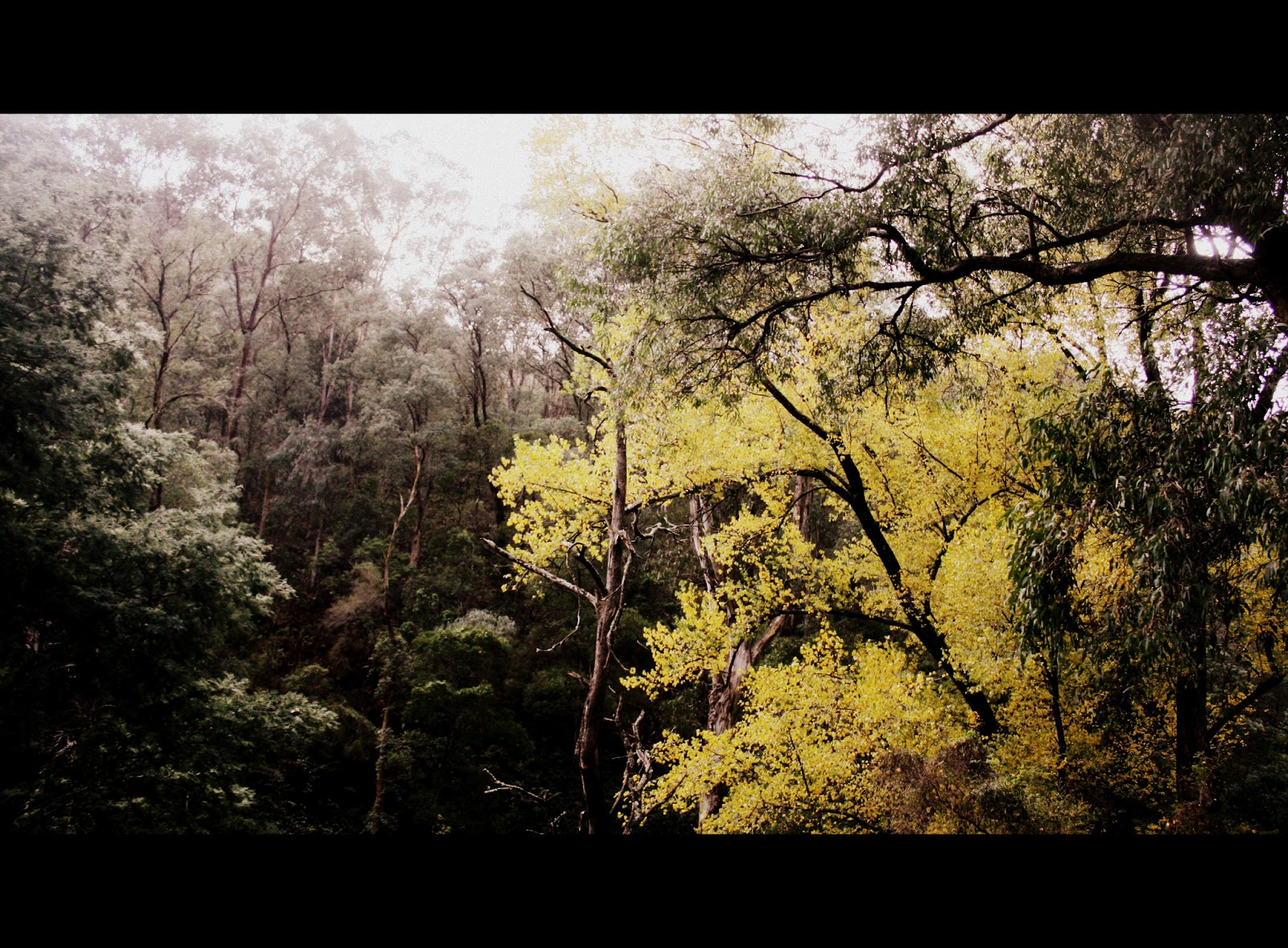 Camping at North Gardens, Walhalla | Camping with the Morris Tribe