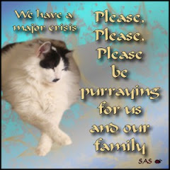 Purrs for Luigi's Buddy's Family: