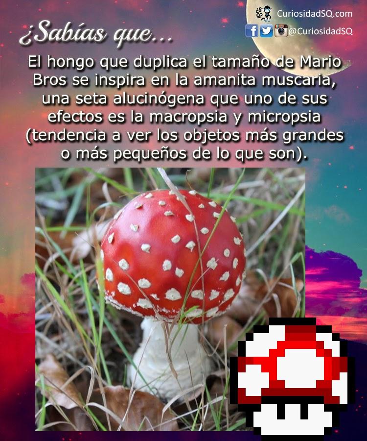 Amanita-Muscaria-Mario-Bros-hongos.jpg