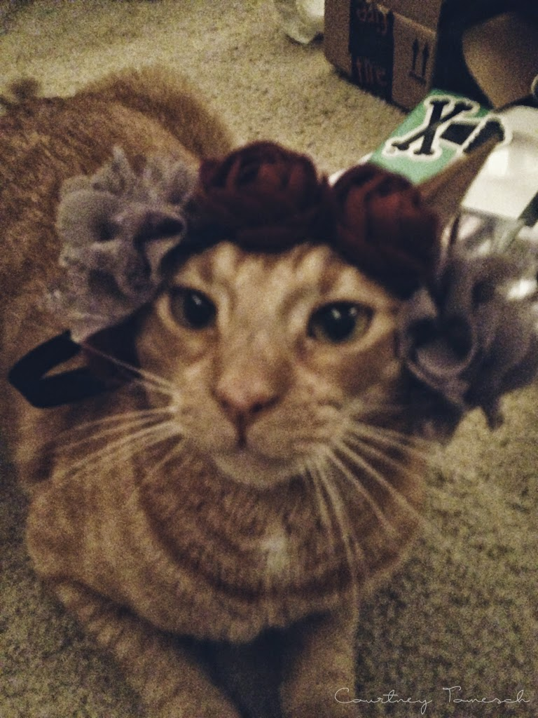 Cruz Ginger Cat Flower Crown