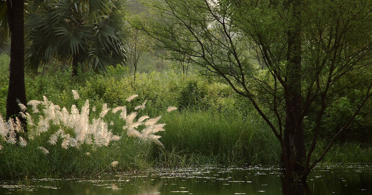 simple living in natural surroundings by henry david thoreau in walden Henry david thoreau (july 12, 1817– may 6,  walden pond he is best known for  a reflection upon simple living in natural surroundings,.