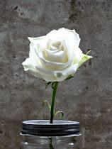 ich liebe Blumen....
