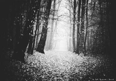 Krościenko Wyżne Park Leśny Dębina