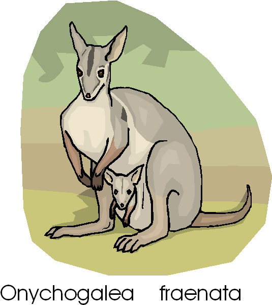 Kangaroo and Baby Kangaroo Free Animal Clipart