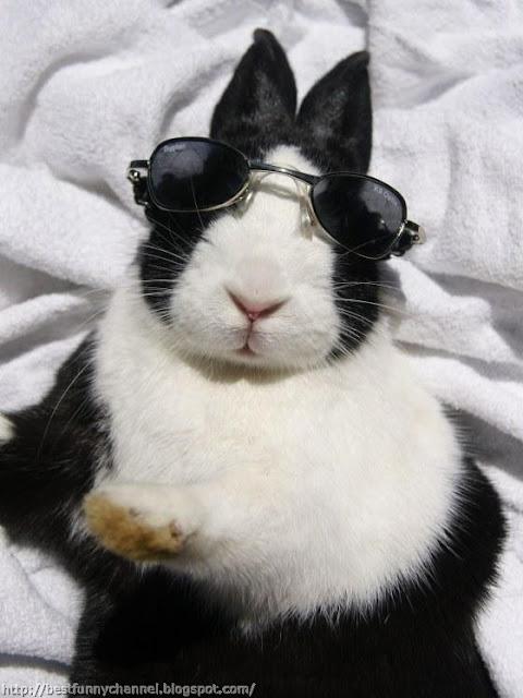 Funny bunny in glasses.