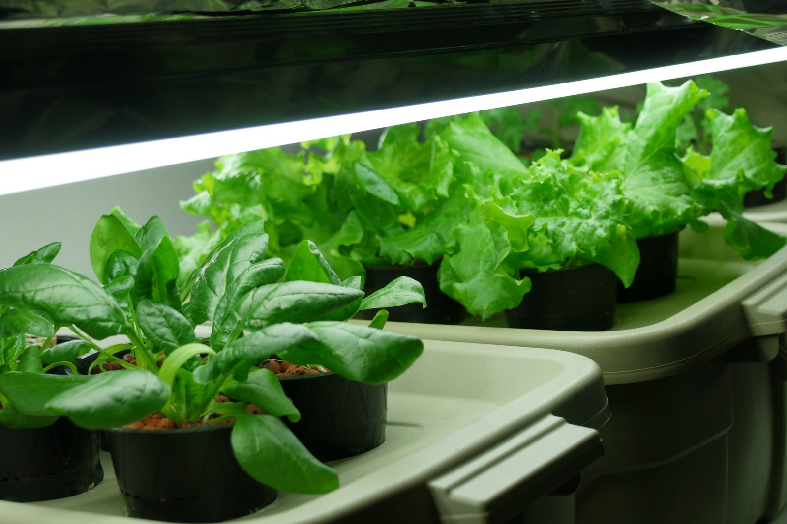 how to get rid of algae in hydroponic system