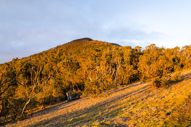 banksia hill under setting sun