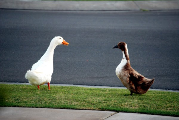 Image result for goose and gander