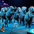 Διώχνει τους ελέφαντες το μεγαλύτερο τσίρκο της Αμερικής εξαιτίας της φυματίωσης;