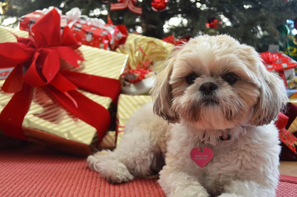 Mrs Meggins really cute puppy dog pictures blog videos stories