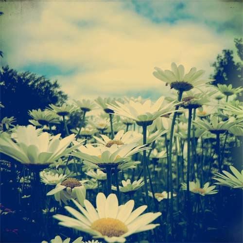 http://2.bp.blogspot.com/-7UgCrJI5Sx8/Ut1k-VWWl8I/AAAAAAAADro/GWY_pBNmzk4/s1600/Daisy+Love+LR.jpg
