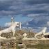 Δήλος: το ιερό νησί της αρχαίας Ελλάδας