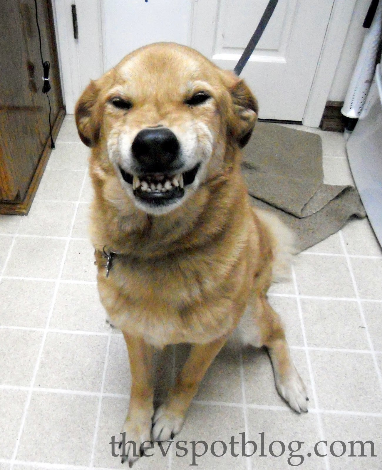 Guilty Dog Cat Treats