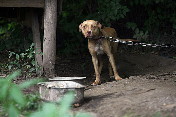 animal abuse a cruelty to animals Cruelty to animals, also called animal abuse, animal neglect or animal cruelty, is the infliction by omission (animal neglect) or by commission by humans of suffering or harm upon any non-human.