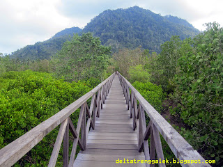 hutan bakau cengkrong trenggalek