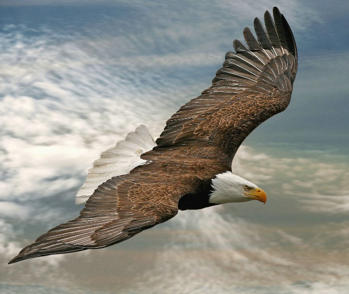 Eagle bird images - photo#21