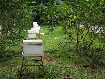 Mango Tours Tagaytay Ilog ni Maria Honeybee Farm