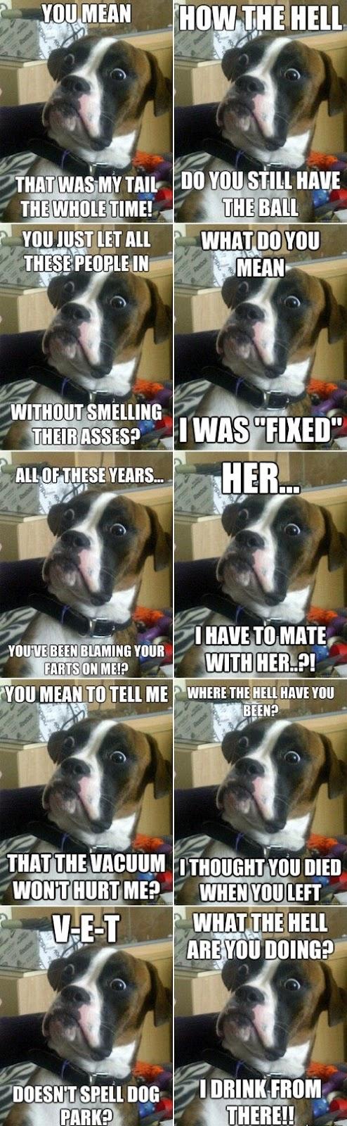 Fragen die sich ein überraschter Hund plötzlich stellt. Oder seinem Herrchen.