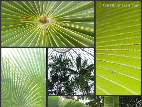 Palm Sunday at the Gardens