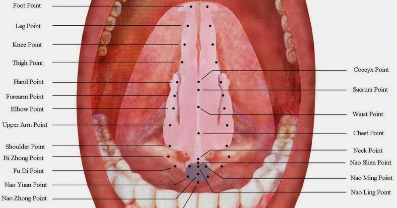 Anatomy for acupuncture